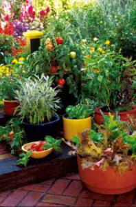 best soil mix for container gardening